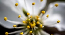 Makro blomst